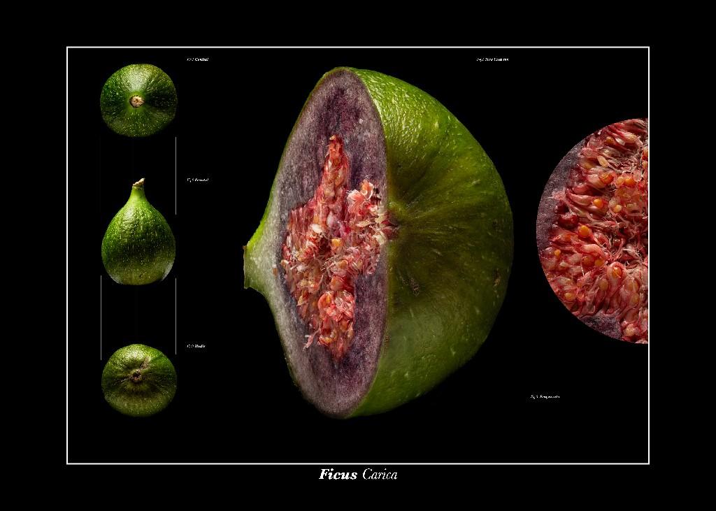 Frutas_Montaje_Breva~1